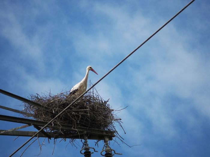 Low angle view of stork in nest