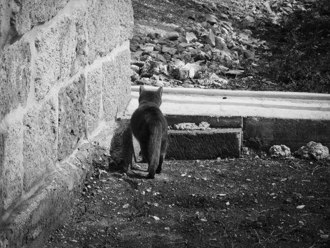 """""""Nella solitudine il solitario divora se stesso, nella moltitudine lo divorano i molti. Ora scegli ..."""" (Friedrich Nietzsche - Umano Troppo Umano) Black And White Loneliness Lonely Cat Grey Cat Fermare L'attimo"""