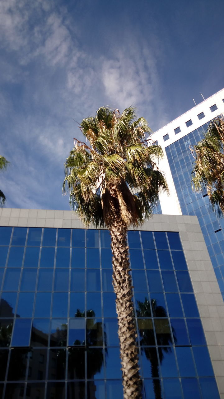 Low Angle View Of Palm Tree By Building Against Sky