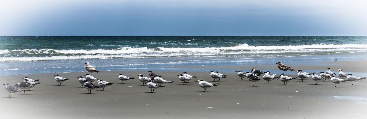 Seagulls Seagulls Seagull Seagulls And Sea Seagul Seaguls Jacksonville Jacksonvillebeach Atlantic Ocean