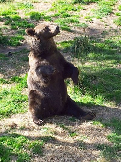 #bear #forest