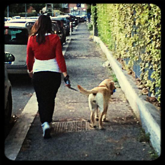 MyJoy Mydog Myfriend Walk