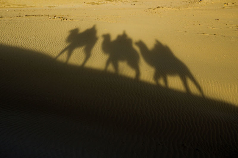 Shadow of people riding on sand