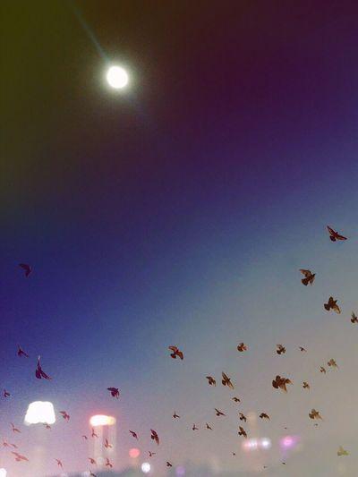 Is it big?😒😒😒 Bird Flying Sky Moon Nature Supermoon Supermoon2016