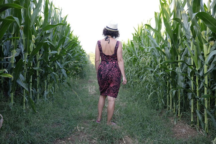 Adult Adults Only Agriculture Cereal Plant Day Field Full Length Grass Growth Leisure Activity Lifestyles Maize Field Nature One Person One Young Woman Only Outdoors Plant Rear View Rural Scene Sky Standing Walking Women Young Women