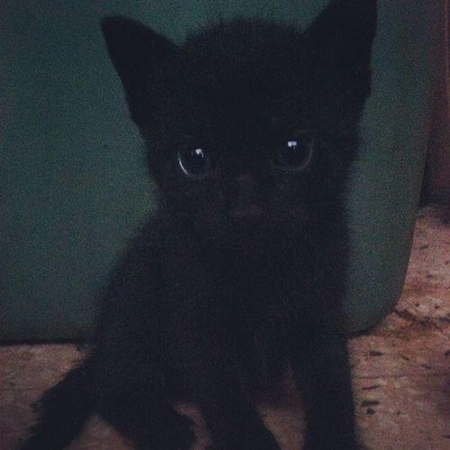 meowww ? Kitty Catsofinstagram Instagramcat Kittens srslycute cute catlover lovemycats mynigga socute