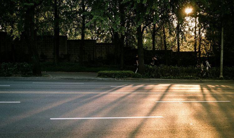 Sunset Light And Shadow Trees Streetphotography Street Walking Around The Street Photographer - 2015 EyeEm Awards Eye4photography  EyeEm Best Shots EyeEm Korea
