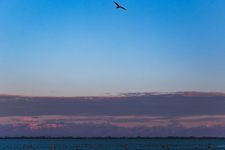 Beauty In Nature Bird Blue Clear Sky Copy Space Day Flying Horizon Over Water Mountains Nature No People Outdoors Scenics Sea Sky Tranquil Scene Tranquility Venice Venice Lagoon Venice Landscape Venice View Venice, Italy Water The Great Outdoors - 2018 EyeEm Awards