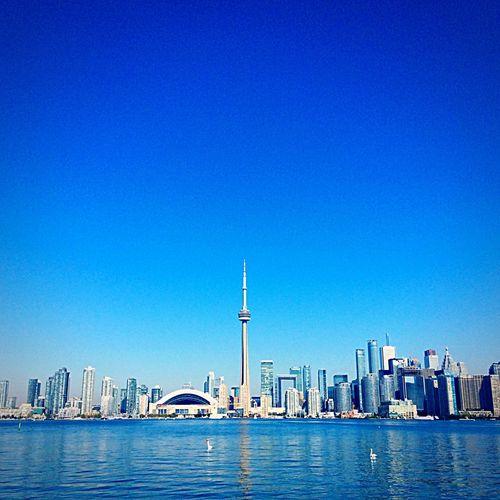 Toronto Island Ducks And Swans Ripples On The Lake High Rise Building Lake Ontario CN Tower Against Blue Sky International Hotel Horizon September Ferry Boat On Lake