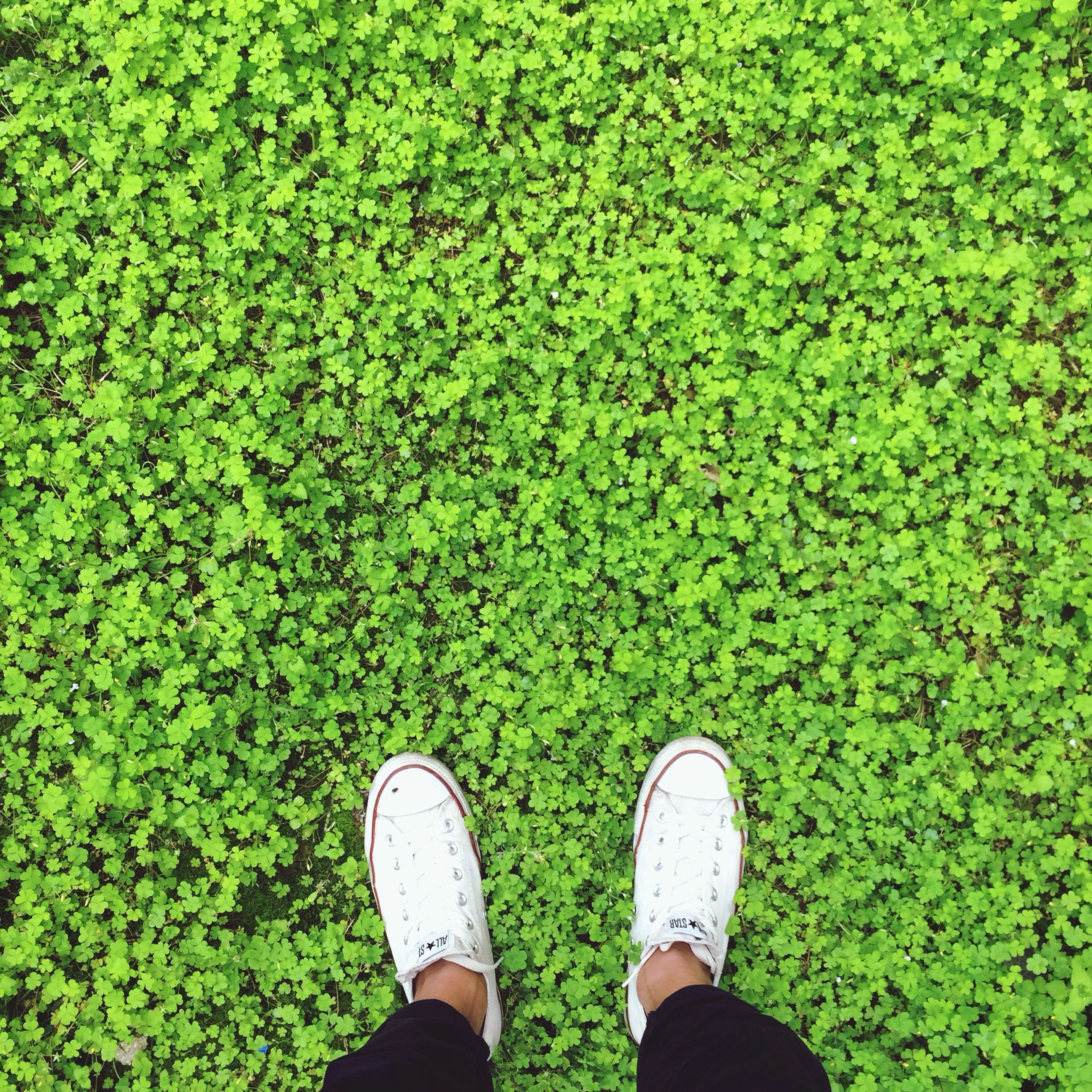 low section, person, shoe, personal perspective, standing, green color, human foot, grass, footwear, high angle view, lifestyles, men, unrecognizable person, directly above, leaf, leisure activity, growth