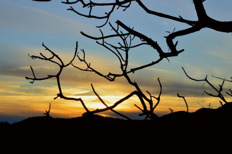 Landscape Silhouette Nature Sunset Beauty In Nature Tree Sky Dramatic Sky Outdoors No People