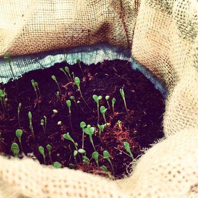 Chuuut ça pousse 🌱 ❤️Garden Flowers Babyflowers