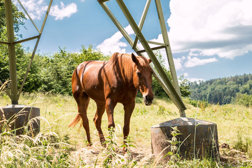 Horses on the green meadow Animal Animal Themes Animal Wildlife Day Domestic Domestic Animals Field Grass Herbivorous Land Livestock Mammal Nature No People One Animal Outdoors Pets Plant Ranch Sky Standing Tree Vertebrate