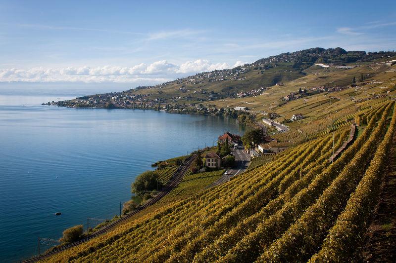 Beautiful Beautiful View Blue Day EyeEm Landscape Eyem Best Shots Green Hills Lake Lake Geneva Landscape Lavaux Peaceful Switzerland UNESCO World Heritage Site Vineyard Terraces Vineyards  Wine Route