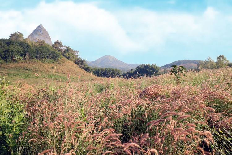Plant Mountain