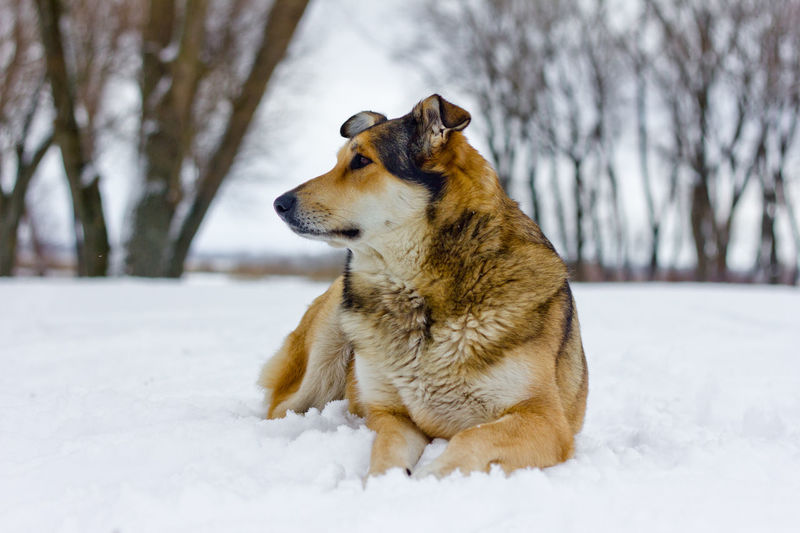 Close-up of dog on snow field