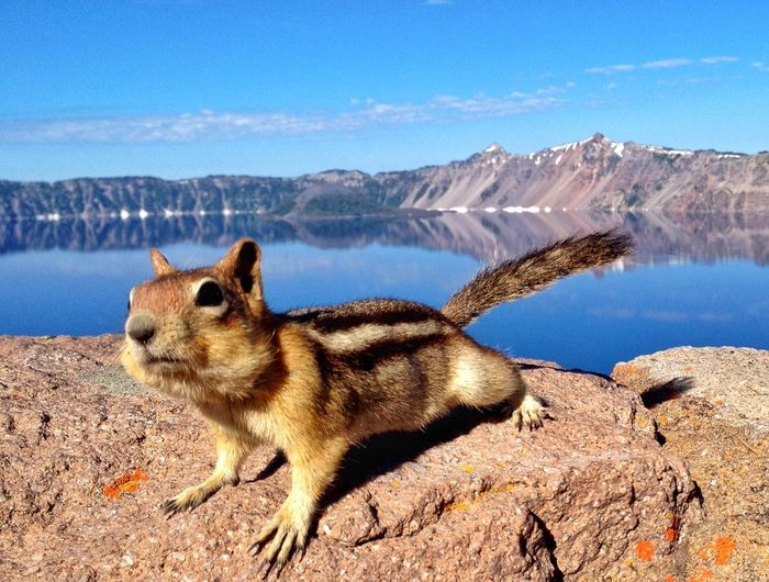 Close-Up Of Squirrels On Rock By Lake