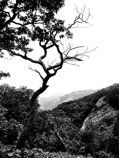 Monochrome Photography Tree Branch Mountain Scenics Beauty In Nature Non-urban Scene Sky Tree Trunk Landscape Black And White Nature Photography EyeEm Cloud - Sky Outdoors Weather Is Perfect Mountain Range Beauty In Nature