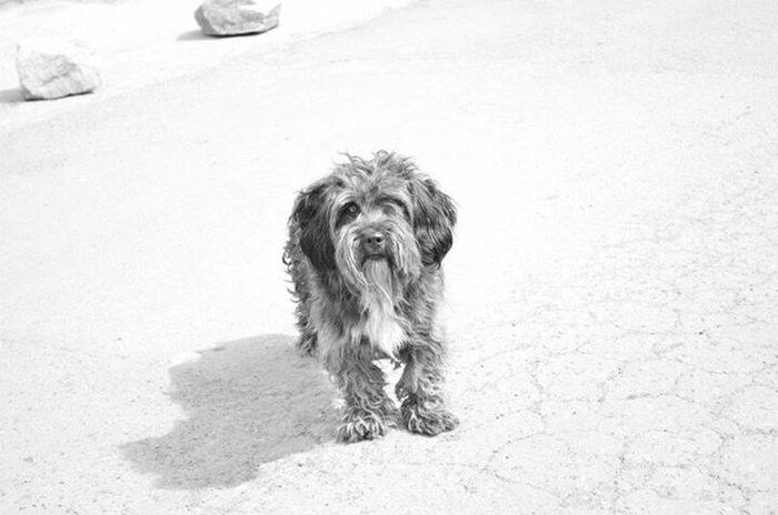 Summer Dogs Dog