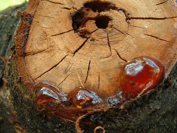 The Hole of the Old Tree Brown Close-up Hole Nature Nature No People Old Tree Old Wood Outdoors Plant Resin Rosin Tree Wood Wooden