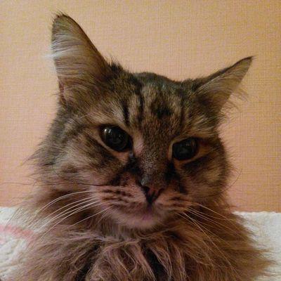 #catsofinstagram #instagramcats #catsagram #2014 #catlovers #catoftheday #caturday #we_love_cats #cat #cats #cutecats #instakotik #котэ #кот #кошка #кошки #котик #katze #katzen #katz Instakotik кошки Cat Котик Cats Cutecats кошка We_love_cats Katze Katz Katzen котэ Caturday Catsofinstagram Instagramcats Catsagram Catoftheday Catlovers 2014 кот