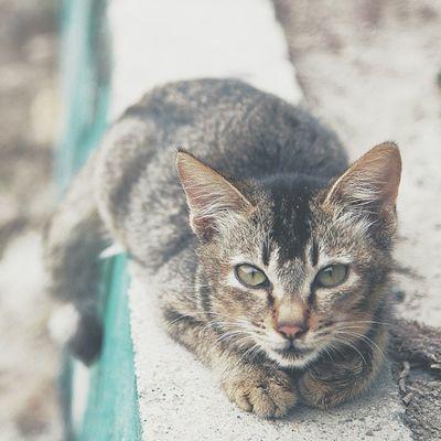 貓  沙螺灣  香港 Cat ShaLoWan HongKong
