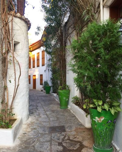 Greek style narrow streets of the old town in Marmaris, Turkey Architecture Authentic Beautiful Blog Bush Marmaris Narrow Narrow Street Nature Old Town Spring Tourism Tourist Travel Travel Blog Travel Destinations Trees Turkey Windows