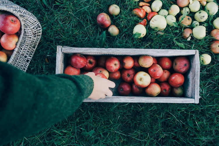 Cropped Hand Woman Filling Container With Apples On Grassy Field