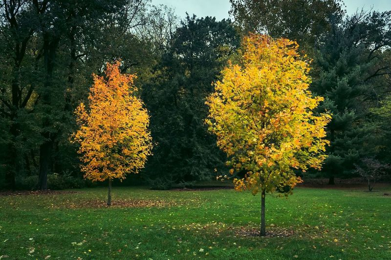 Autumn Tree Nature Beauty In Nature Yellow Outdoors Tranquility Landscape