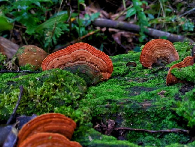 EyeEmNewHere High Angle View Beauty In Nature Tree Day Nature Outdoors Grass Photography Themes Mushrooms 🍄🍄 Mushrooms Mushroom_pictures Mushroom Collection Mushroom Photography Mushroom Hunting
