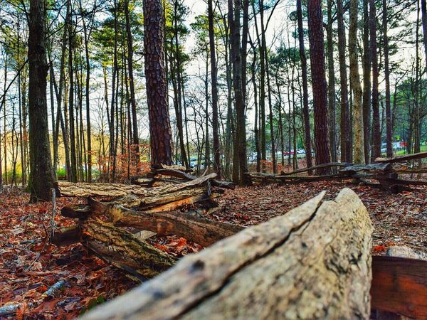 My morning walk ! Day 5th of 365 365 Day Challenge Nature_collection EyeEm Nature Lover Woods Landscape_photography