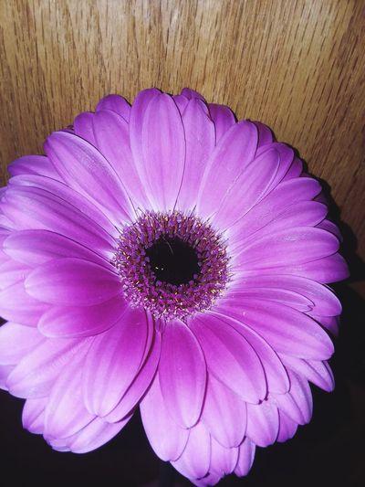 Flower Purple Petal Fragility Flower Head Beauty In Nature No People