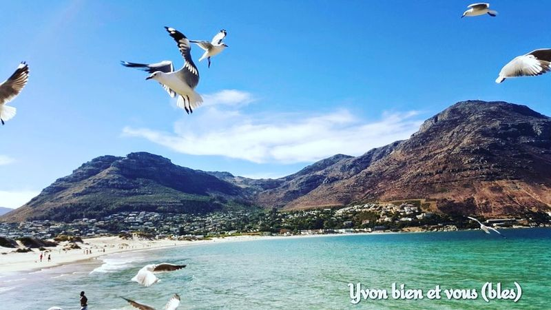 instant Bird Flying Bird In Flight Sea And Sky View Trip Voyage Mer Vacations View Seagull Seagulls Take Off South South Africa Captown Yvonbien Flight Flying Water Beach Mid-air Sea Mountain Outdoors Bird Day Sky Nature Spread Wings Animal Themes