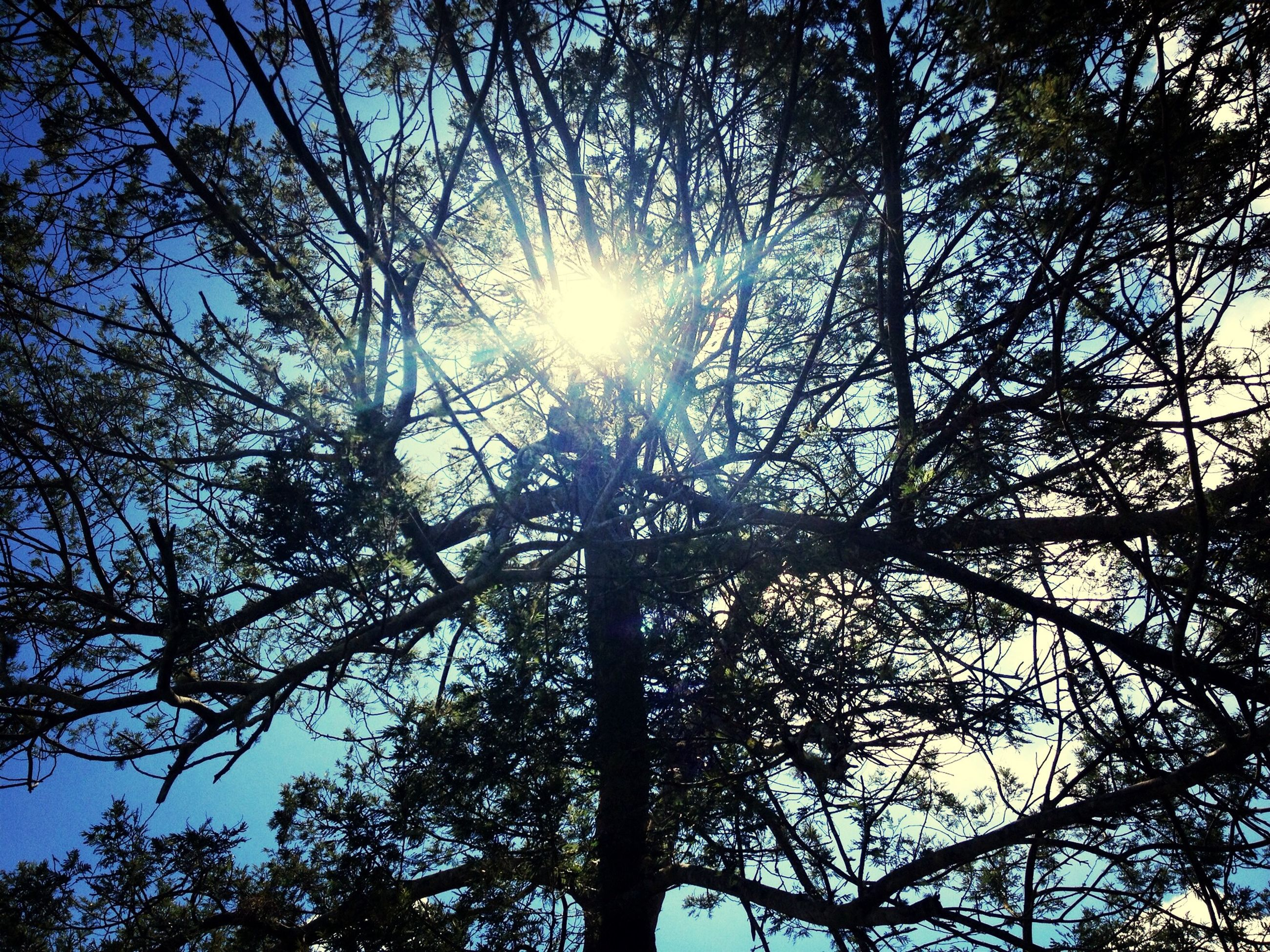 tree, low angle view, sun, branch, sunbeam, sunlight, tranquility, growth, nature, lens flare, beauty in nature, sky, silhouette, back lit, scenics, tree trunk, day, sunny, tranquil scene, bright