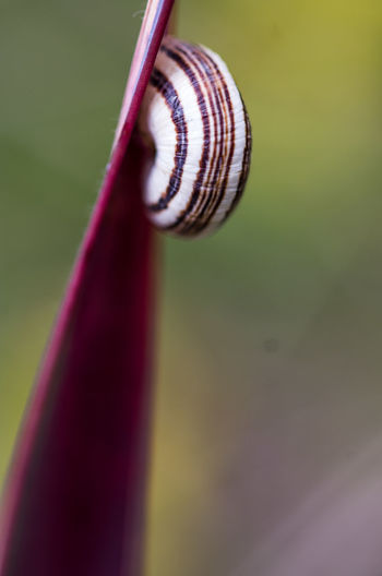 Close-up Extreme Close Up Extreme Close-up Focus On Foreground Green Color No People Part Of Selective Focus Snail