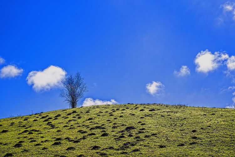 hill with green