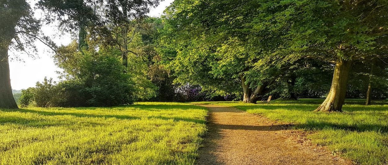 Beauty In Nature Day Direction Environment Field Footpath Grass Green Color Growth Land Landscape Nature No People Non-urban Scene Outdoors Plant Scenics - Nature The Way Forward Trail Tranquil Scene Tranquility Tree