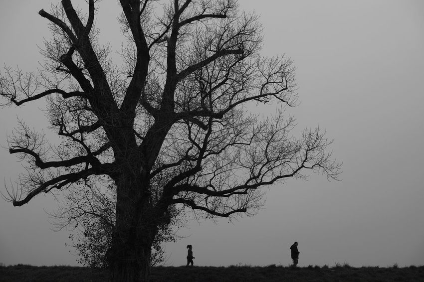 Tree Plant Sky Bare Tree Silhouette Beauty In Nature Nature Tranquility Real People Branch Land Clear Sky Tranquil Scene Landscape Field Scenics - Nature Trunk People Tree Trunk Women Outdoors