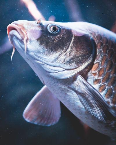 Fish UnderSea Sea Life Underwater Fish Close-up Aquarium Animal Fin Fish Tank Aquatic Mammal