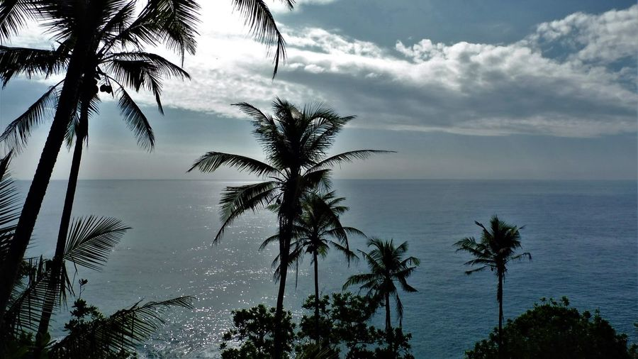 Sri Lanka Beach Beauty In Nature Cloud - Sky Day Growth Horizon Over Water Idyllic Nature No People Outdoors Palm Tree Scenics Sea Sky Tranquil Scene Tranquility Tree Tree Trunk Water