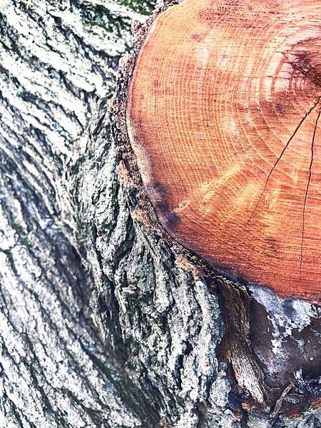 Textured  Tree Trunk Nature Close-up Full Frame Outdoors Tree Stump Tree Day Tree Ring Serine Life The Great Outdoors - 2017 EyeEm Awards