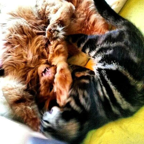 Yin and yang Yingyang Yinyang Ying Yang Yin And Yang Yin Yang Cats Cats Catoftheday Cat Fight Caturday Cats 🐱 Cats Of EyeEm Cat Lovers Catlady
