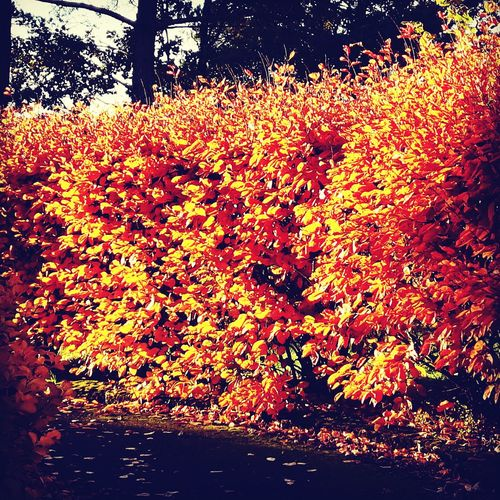 Autum Check This Out