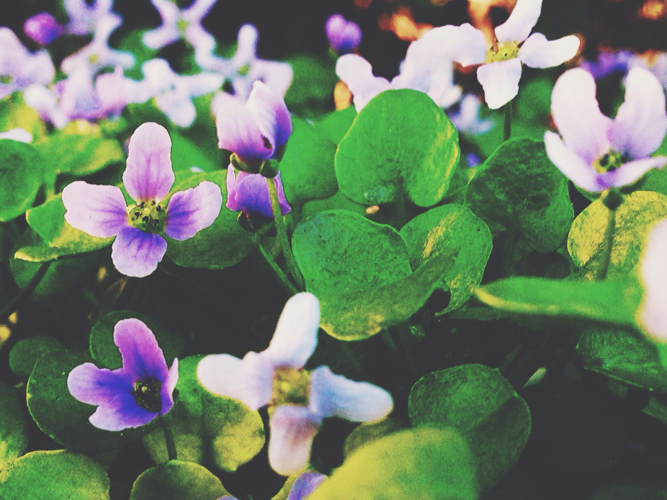 flower, petal, freshness, fragility, growth, purple, flower head, beauty in nature, plant, blooming, leaf, nature, close-up, focus on foreground, in bloom, park - man made space, day, outdoors, high angle view, no people