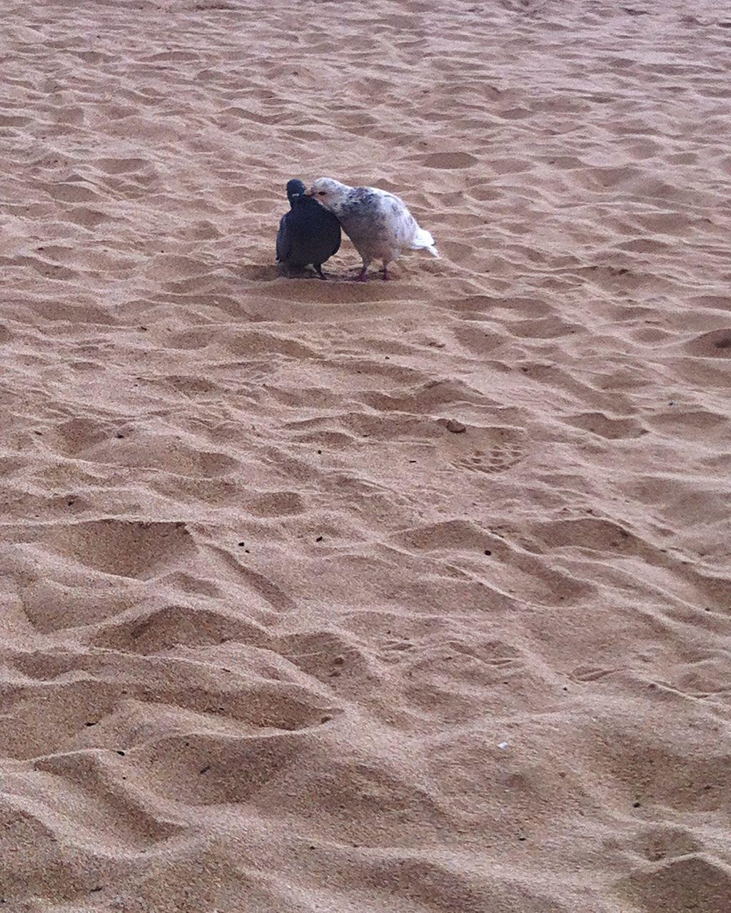 Birds On Sand At Beach