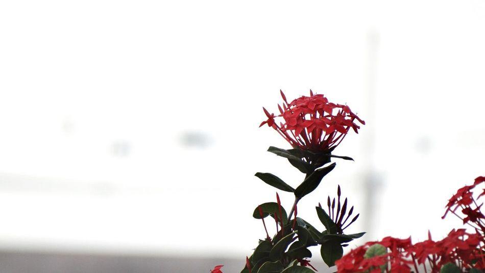 Flowers Flower Flower Collection Flowers,Plants & Garden Spring Flowers Flowerporn Plants EyeEm Flower Lovely you. Nature On Your Doorstep Thoto taken at Gandhigram, Rajkot, India.