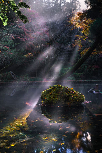 aso japan Autumn Beauty In Nature Branch Day Forest Growth Idyllic Long Exposure Motion Nature No People Outdoors Reflection River Scenics Sky Tranquil Scene Tranquility Tree Water Waterfall