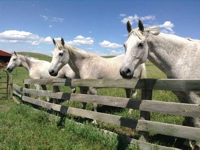 Horses Standing In Ranch Against Sky During Sunny Day