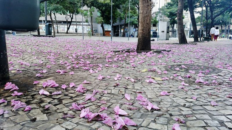 Flower Tree Pink Color Day Tranquility Street