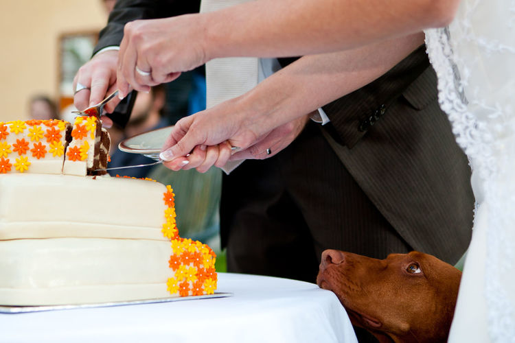 Begging Begging Dog Wedding Beggingdog Celebration Cutting The Cake Dog Dog Life Dogslife Event Food Food And Drink Hand Human Body Part Human Hand Life Events People Pet Owner Real People Sweet Sweet Food Viszla Wedding Cake Wedding Day Wedding Party Adventures In The City The Photojournalist - 2018 EyeEm Awards